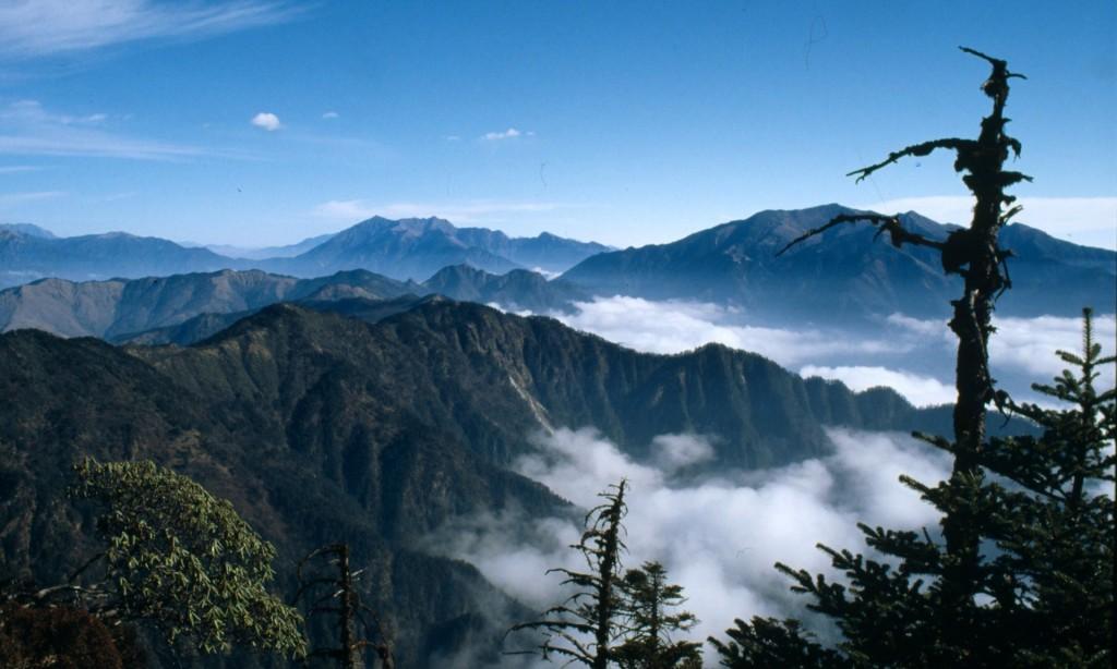 ჩინეთის გიგანტური პანდების ნაკრძალი. ფოტო: Donald G. Reid/WWF